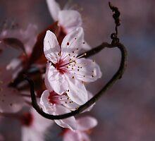 fancy floristry ;) by BettinaSchwarz