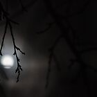 Une nuit de pleine Lune by Airwalkmax