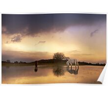 Enchanted Light - New Forest Poster