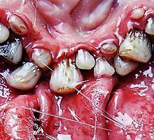 brush yer teeth by dogzillalives
