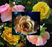 Beauty Contest - All Roses Collage by SunriseRose