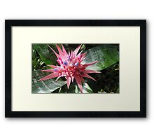 Pointy Pink Pedals Framed Print