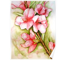 Peach Flower Watercolor iPhone Case Poster