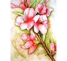 Peach Flower Watercolor iPhone Case Photographic Print