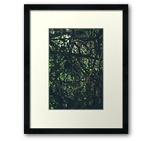 Green  forest nature Framed Print