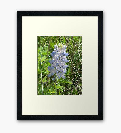Light Blue Closeup Framed Print