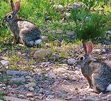 Bunny Heaven: Lake Murray by Cherubtree