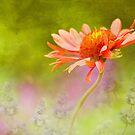 Garden Dance by Colleen Farrell