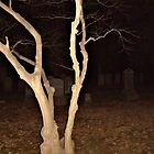 Twisted Tree in the Cemetery at Night by Jane Neill-Hancock