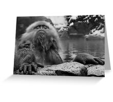 "Do ""not"" bother me while I'm relaxing..! Greeting Card"