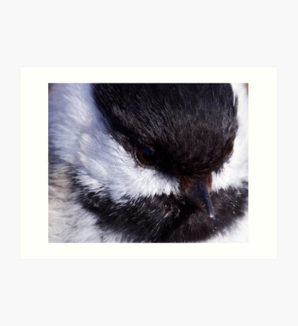 Chickadee: Up close and Personal Art Print