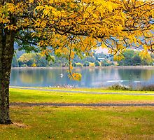 On Golden Pond by Nicole Bechaz