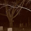 Spirit Trees in the Cemetery at Night by Jane Neill-Hancock