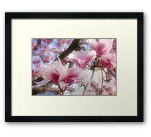 Magnolia Blossoms Framed Print