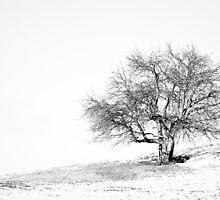 Lone Tree by Shane Shaw