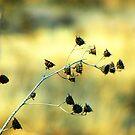 Spring wilderness by photo36