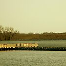Spring comes to Lake by photo36