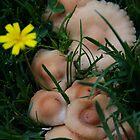 Backyard Fungi by Ahscotty
