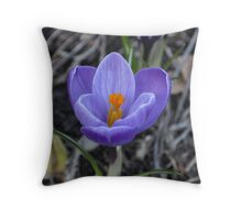 Purple and white tulip opening Throw Pillow