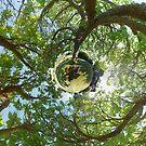 In Treetops by Evan Sharboneau