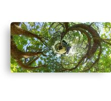 In Treetops Canvas Print