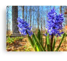 Spring Hyacinths Canvas Print