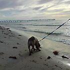 Dog at the Beach by Sandie13