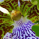 Orchid Alien by Penny Smith