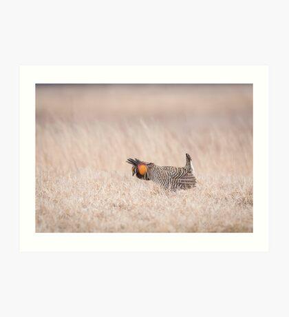 Prairie Chicken 1-2015 Art Print