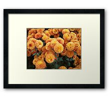 So Bright And Cheery Framed Print