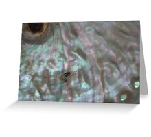 Opalescent  shell found on Shoreham beach, 2007 Greeting Card