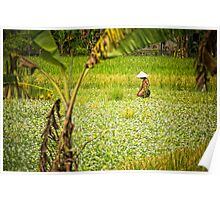 Watercress - Lombok, Indonesia Poster