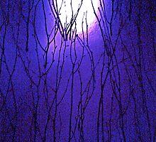 purple haze by Jennifer Ferry