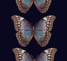Vintage butterflies by bunyipdesigns