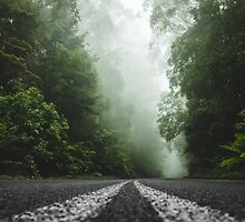 Misty Otway Forest by Ana Andres-Arroyo