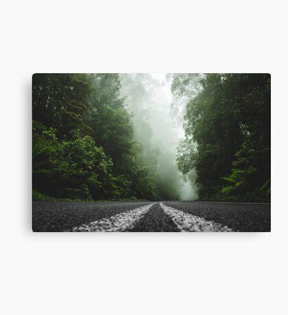 Misty Otway Forest Canvas Print