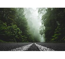 Misty Otway Forest Photographic Print