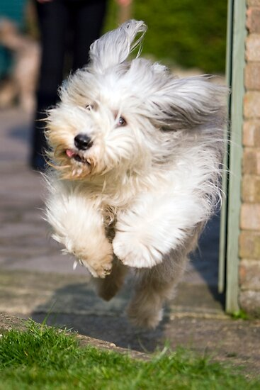 Bailey In Flight by Paul Thompson Photography