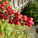 Berries by Freek Monteban