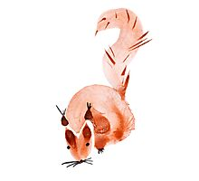 watercolor squirrel. Watercolor hand drawn brush Photographic Print