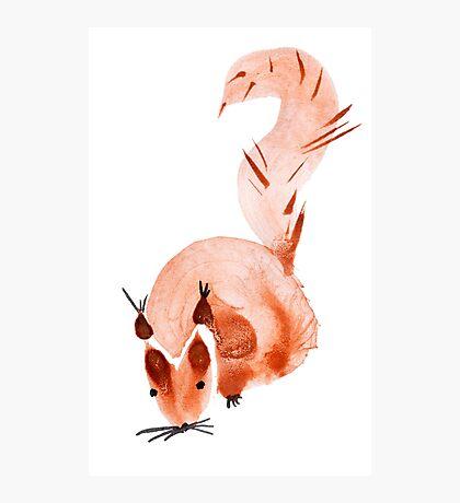 watercolor squirrel. Watercolor hand drawn brush Photographic Print