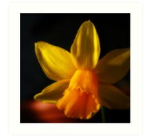 Dark Daffodil Art Print