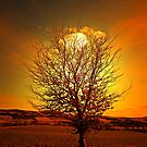 THE BEAUTIFUL TREE by leonie7
