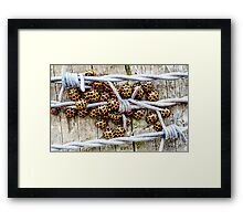 Barbed Wire Wrap Framed Print