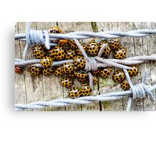 Barbed Wire Wrap Canvas Print