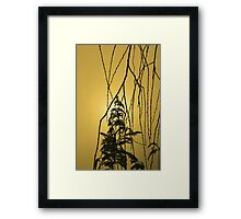 Willow Tree Branches Framed Print