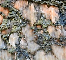 Rock Abstract VII by Alexandra Lavizzari