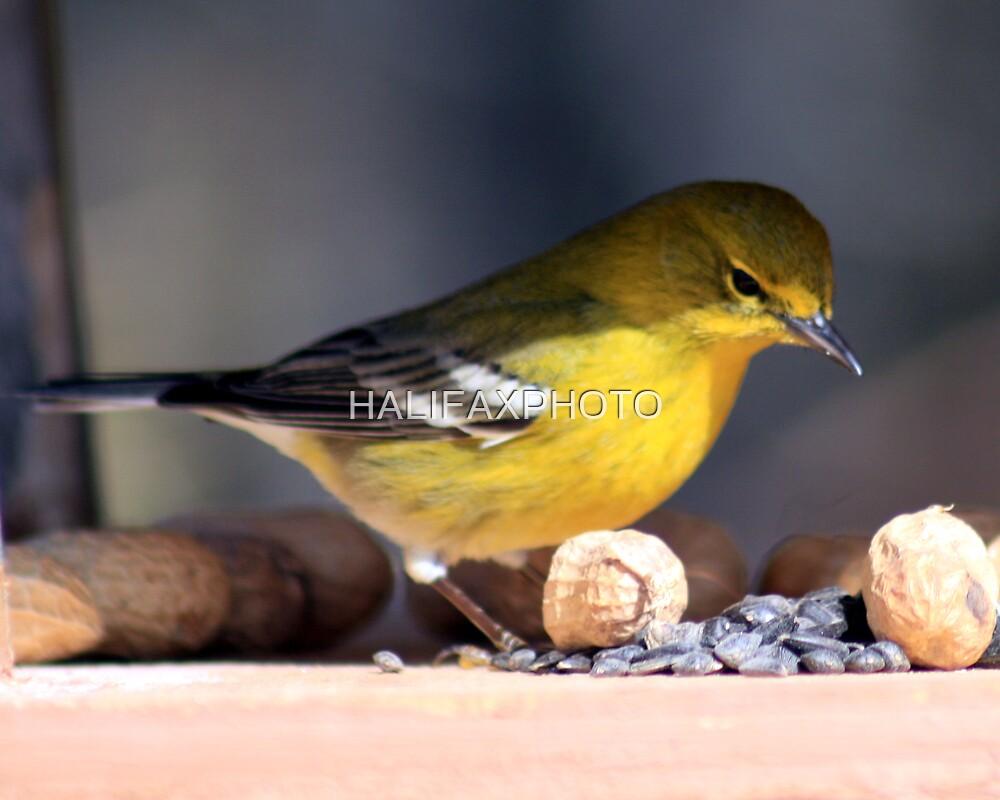 Yellow Bird by HALIFAXPHOTO