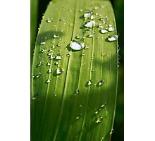 Raindrops on a green leaf Photographic Print