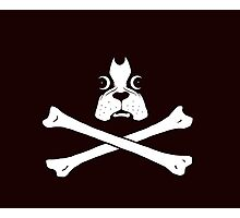 Dog Pirate Photographic Print